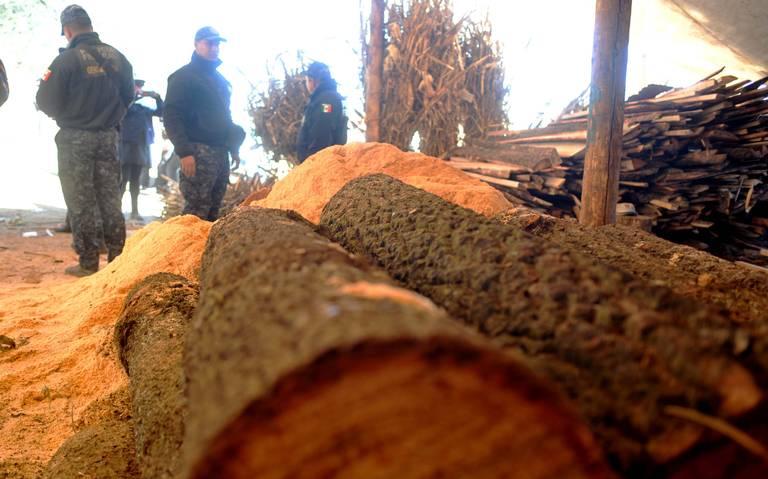 Sufren amenazas personal de Conanp por parte del crimen organizado dedicado a tala de árboles