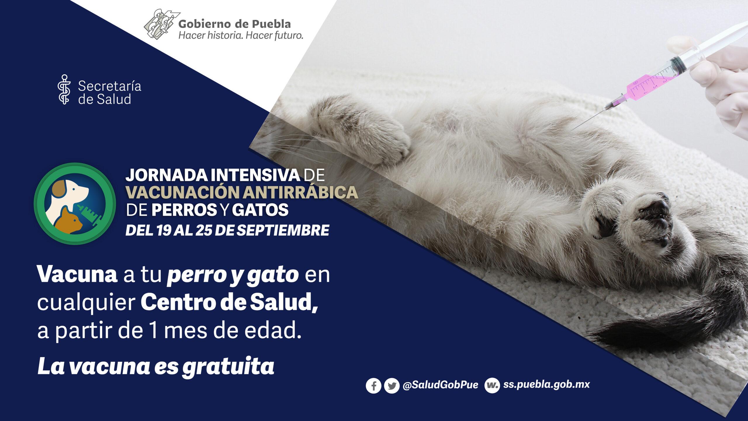 Puebla, libre de casos de rabia en humanos transmitida por perros: Salud